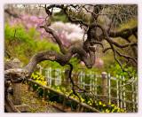 A Garden Tree Abstract