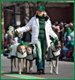 On St. Pats Day, All The Dogs Are Irish.