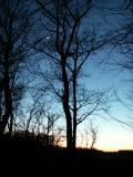 L'arbre à la lune.