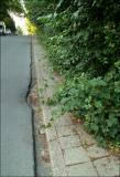 Ce trottoir est toujours encombré mais là c'est le bouquet ! (si j'ose dire...)