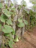 A gord fence !!!
