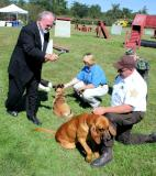 Search Dogs being Blessed