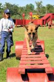 Agility Training Search Dogs