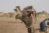Thar Desert village