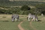 game park, outside Port Elizabeth