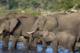 botswana: Chobe game park