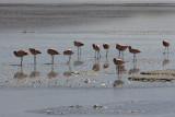 flamingos, en route to Uyuni