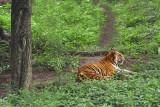 Periyar, Kerala. nature reserve
