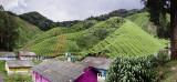 tanah rata, cameron highlands.  panorama