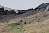 Rano Raraku crater
