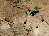 Etosha game park, birds