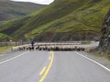 andean road block.JPG
