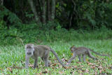 Long-Tailed Macaques - mother and baby