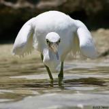 Heron Island - wildlife