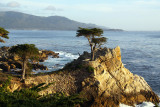 Lone Cypress Tree IMG_1362 fix800.jpg