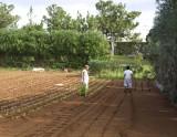 preparing to plant2.jpg