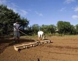 Preparing to plant.jpg