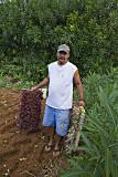 Planting lettuce2.jpg