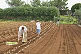 planting lettuce.jpg