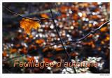 Fall Foliages