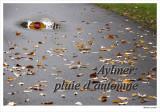Aylmer: Fall Rain
