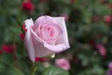 Floral Fair