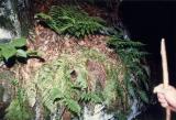 Bird's Nest along the trail ..