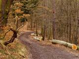 Winter Wood 3