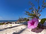 The Beach 8