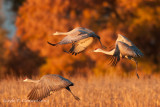 Sandhills in Fall Color