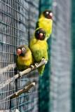 Lovebirds with Nikon D3
