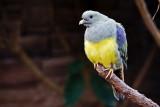 A bird with the Nikon D3
