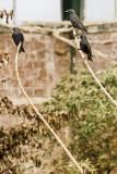 Asian birds with Nikon D3