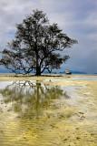 Ko Mak. Boat and tree
