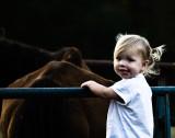 A  Horses ..............