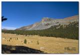 Mt. Dana with meadows