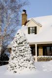 Il a neigé (41cm) le 16 déc. 2005