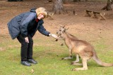 Kangaroos are attracted to Ginny - she has food