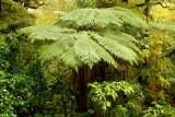 Tree fern - very prehistoric looking