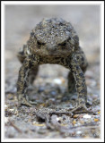 Toad with attitude!!!