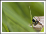 Frogs eye view!