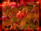 October 2008: Colours of the season