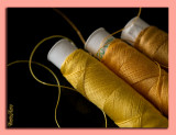 19 - Yellow Cotton