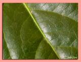 22 - Green Leaves