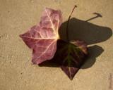 1 - Autumn Leaf