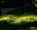 6 - Squirrel