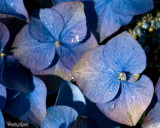 10 - Blues