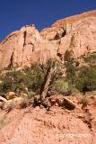 IMG_0084hwy 12 burr trail.jpg