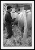 Peigneur de vache