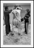 Salon de l'agricultureCoiffeur pour vaches (4)